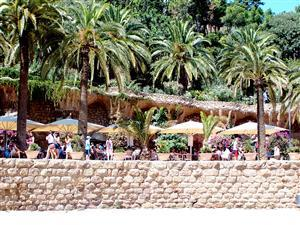 Park Guell Palm Trees