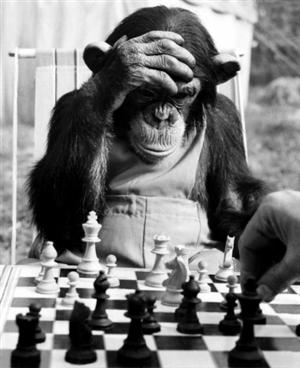 Chimp Playing Chess